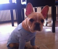 Herc in his pjs